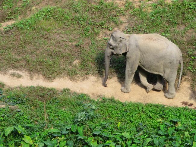 Le Laos, pays du million d'éléphants… moins 999 200